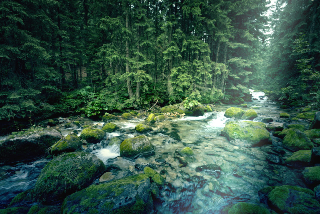 River in the dark forest. Nature concept.